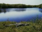 Everglades National Park 大沼泽地国家公园