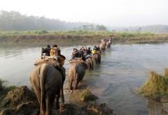 Chitwan National Park 奇特旺