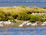 Parc naturel régional de Camargue 卡马尔格自然保护区