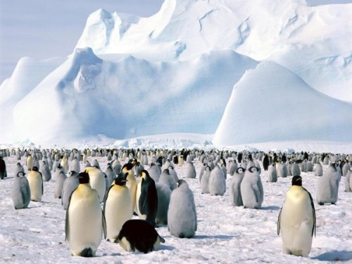 Antarctica 南极洲