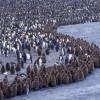 Antarctica-Falklands-South-Georgia-3-penguins.jpg