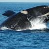 ID53_puerto-madryn-hogar-de-ballenas-en-argentina.jpg