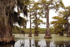 Big Cypress National Preserve 大柏树国家保护区