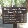 mariposa-grove.jpg