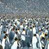 penguins_999436i.jpg