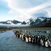 photo-of-South-Georgia-island-penguin.jpg